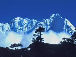 Himalaya Herbal Helthcare-vodeći svjetski proizvođač biljnih pripravaka