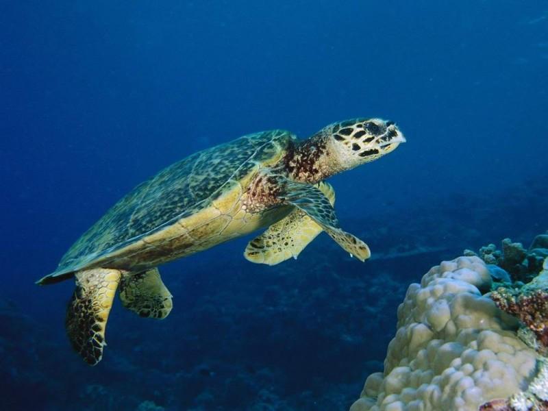Oporavilište za morske kornjače na Lošinju