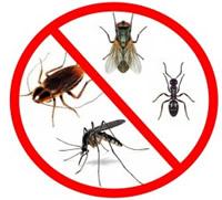 Kako se riješiti insekata na prirodni način