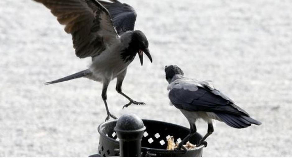 Tko se boji vrana, kosova, djetlića i ostalih ptica još?